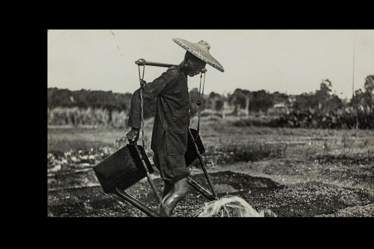 Black and white photo. Man wearing a straw hat waters crop using a carrying pole over his shoulders