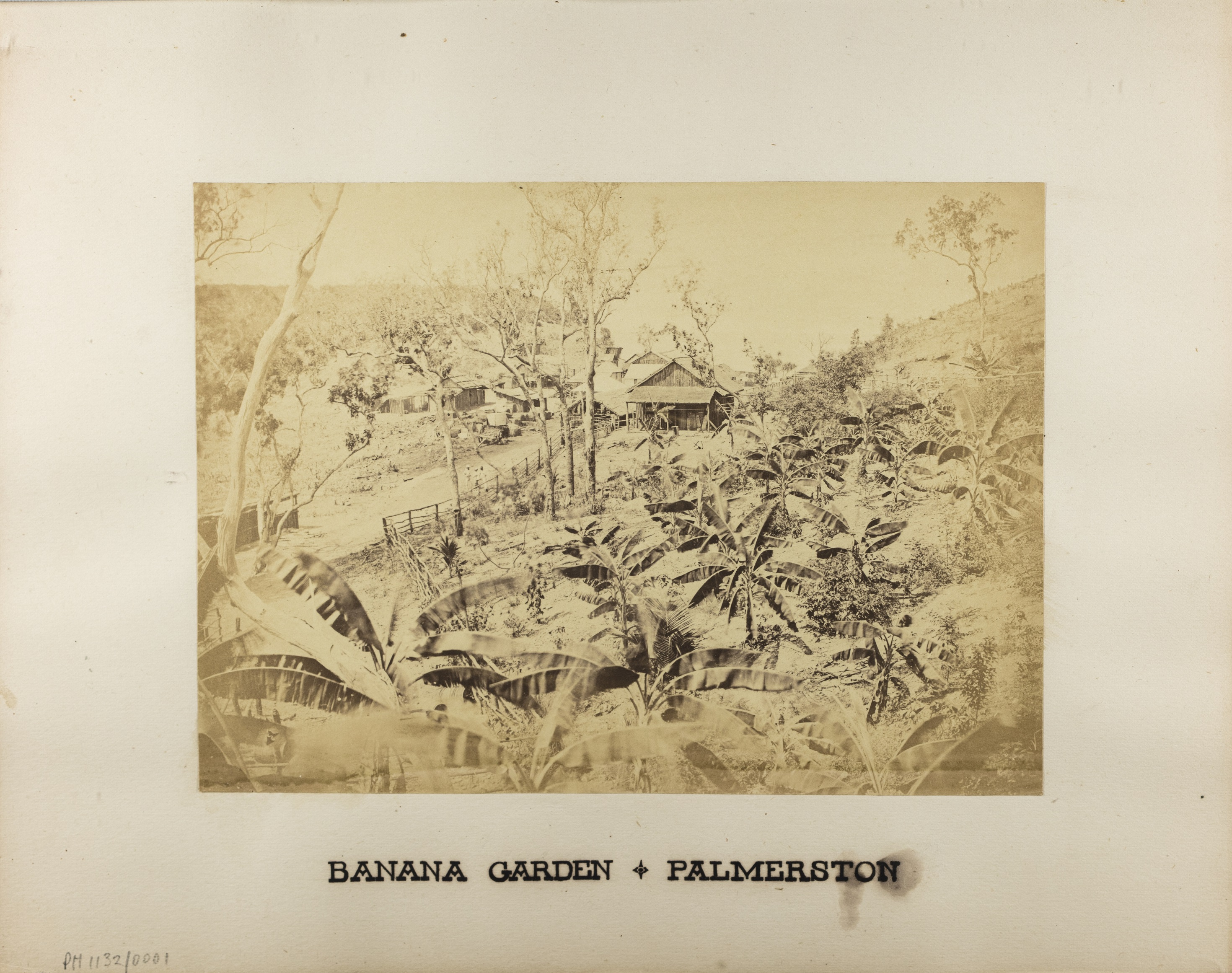 Framed image of Banana garden beside road leading down to main survey camp at the base of Fort Hill, 1869