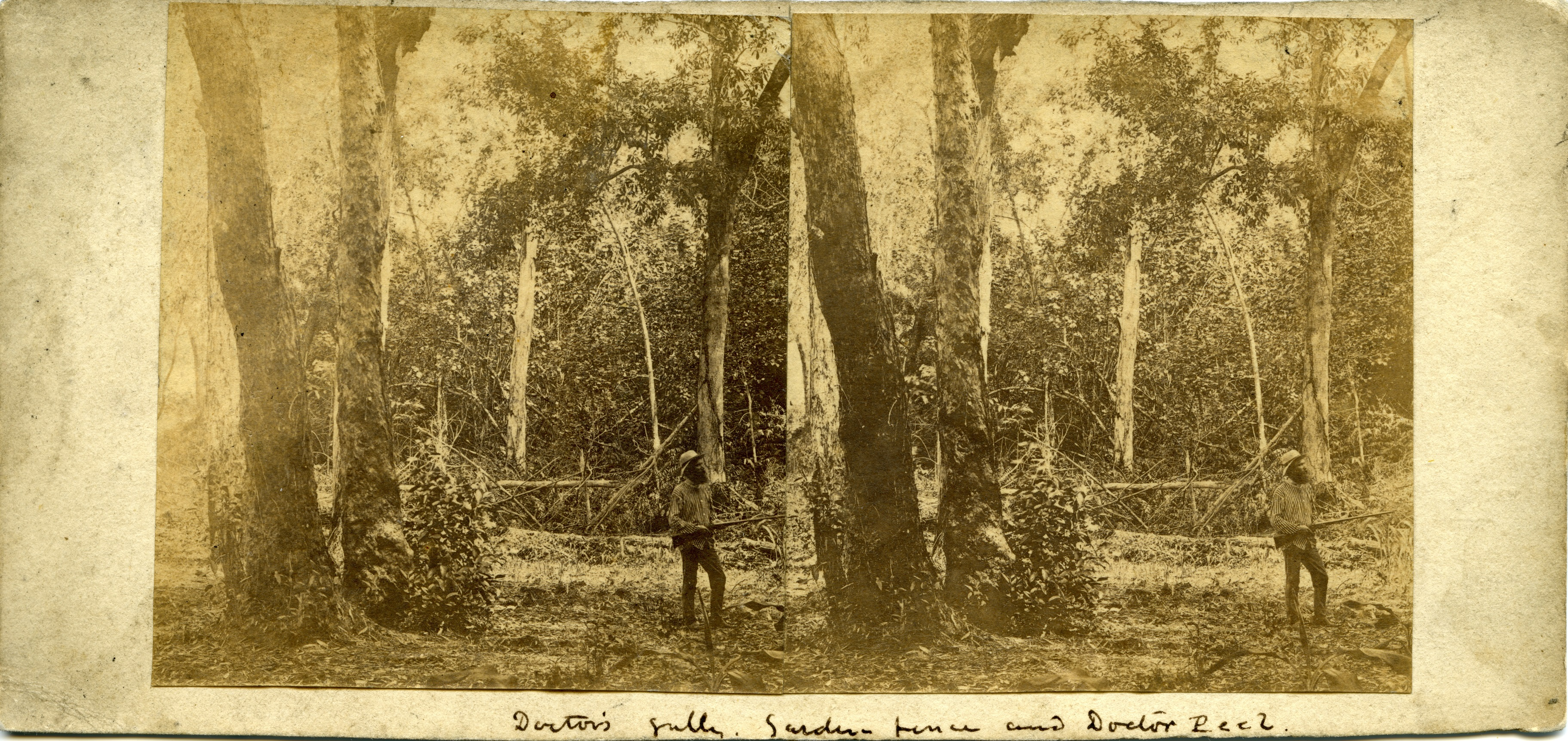 Stereoscopic image of Doctor Peel at Doctor's Gully Garden, 1869