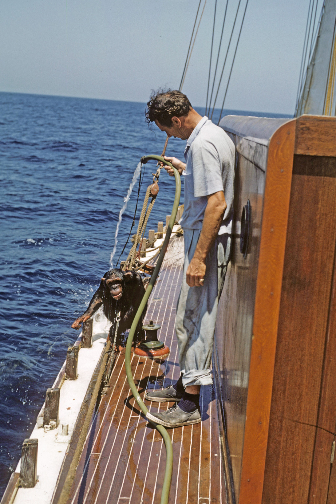A chimpanzee is hosed down on the deck of a yacht at sea.